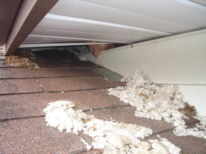 Raccoon entry through soffit
