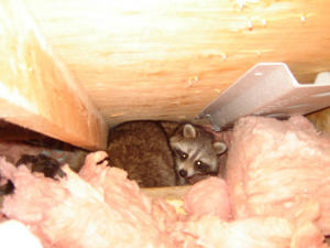 Mom and babies in attic