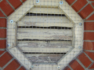 Screened structure vent